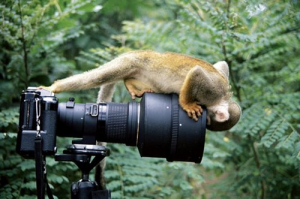 MonkeyLookCameraLens_09b